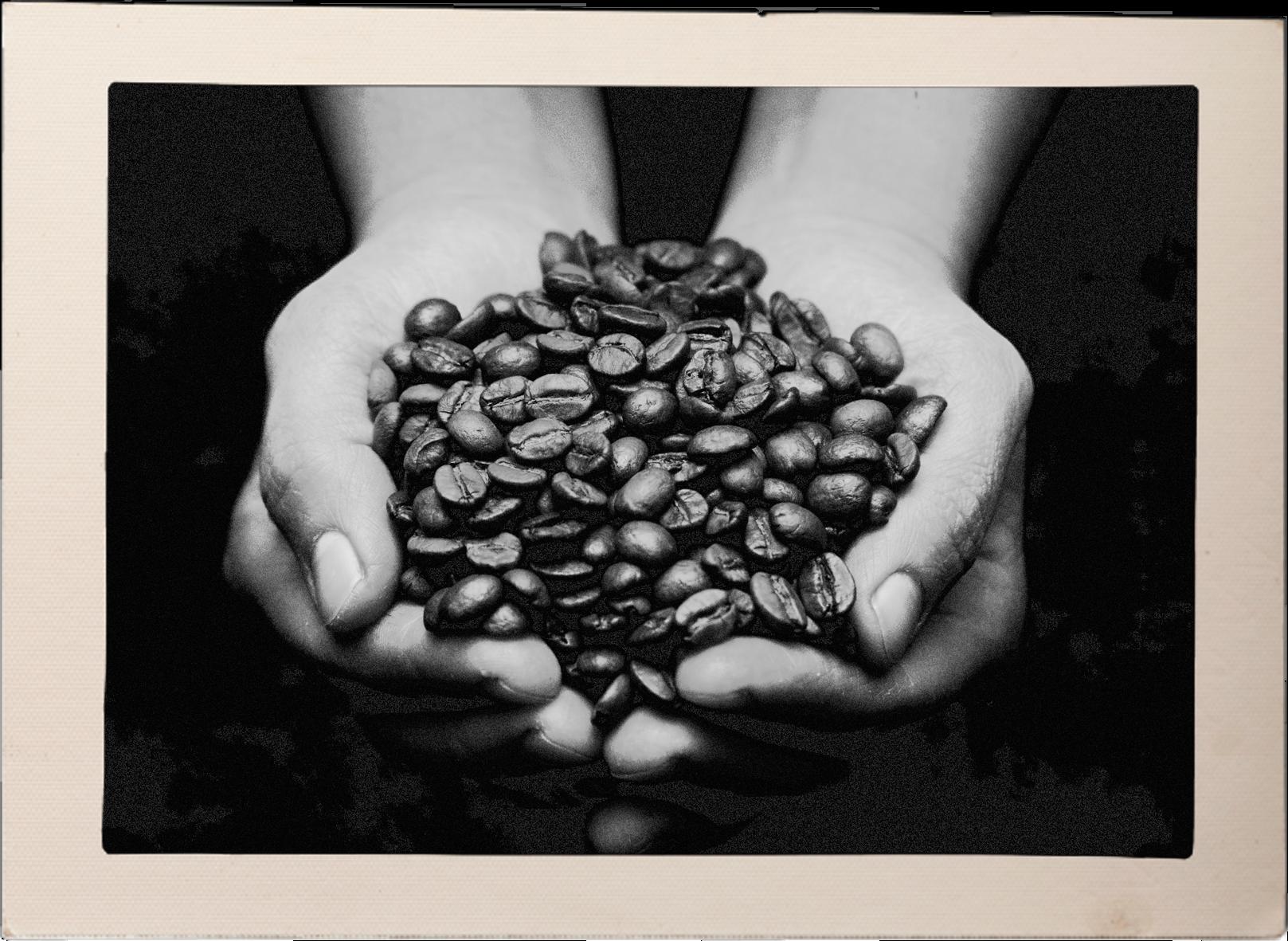 Häande mit Kaffeebohnen